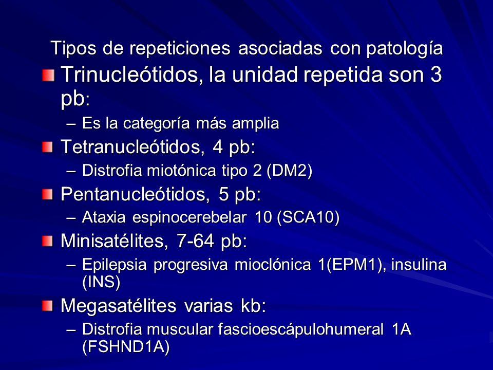 Tipos de repeticiones asociadas con patología