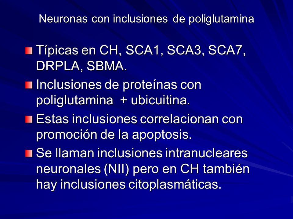 Neuronas con inclusiones de poliglutamina