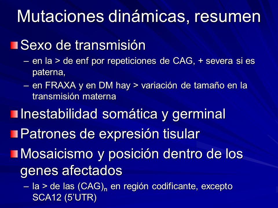Mutaciones dinámicas, resumen