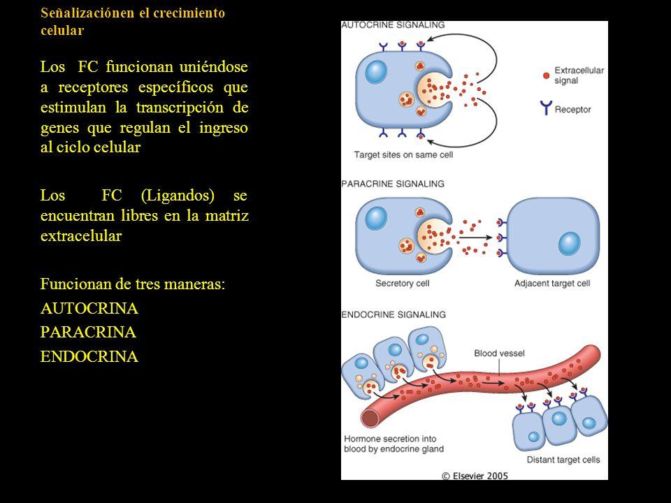 Señalizaciónen el crecimiento celular