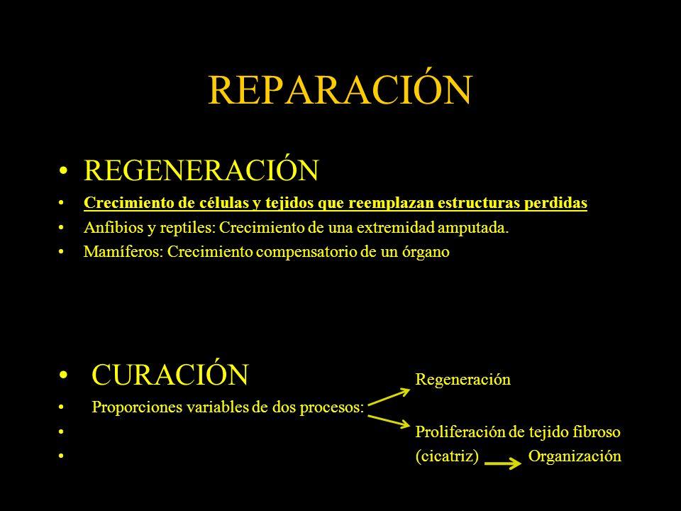 REPARACIÓN REGENERACIÓN CURACIÓN Regeneración