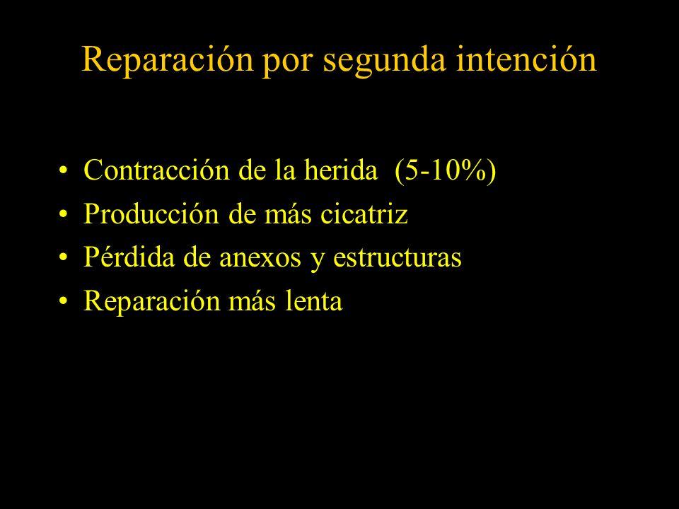 Reparación por segunda intención