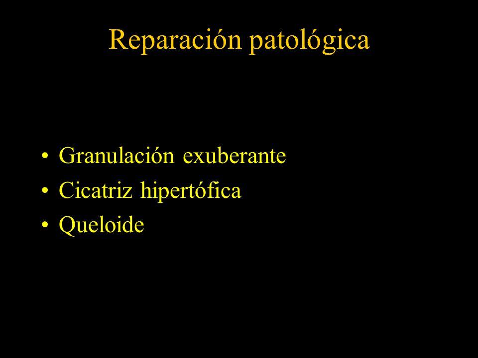 Reparación patológica