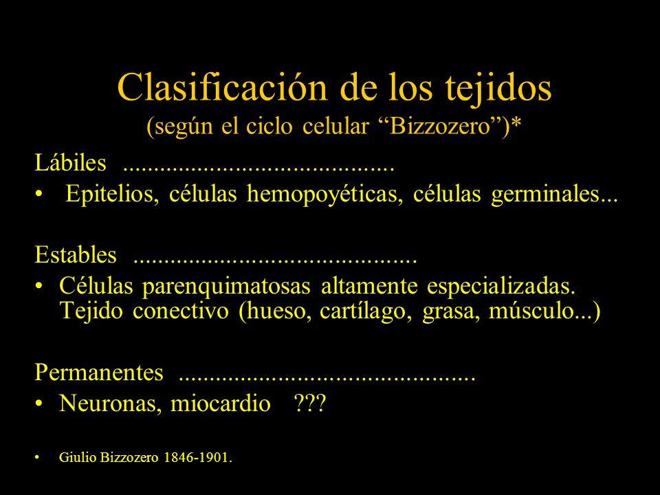 Clasificación de los tejidos (según el ciclo celular Bizzozero )*