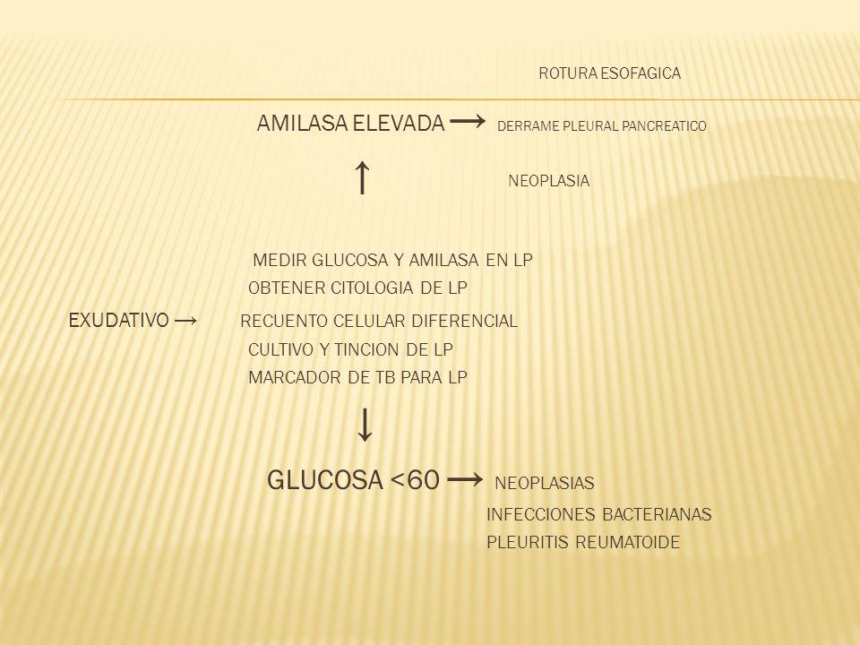 AMILASA ELEVADA → DERRAME PLEURAL PANCREATICO ↑ NEOPLASIA