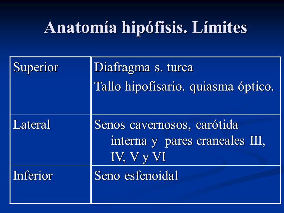 Anatomía hipófisis. Límites