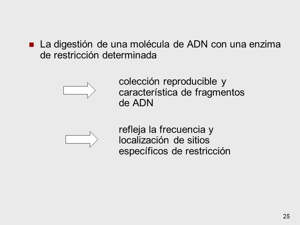 colección reproducible y característica de fragmentos de ADN