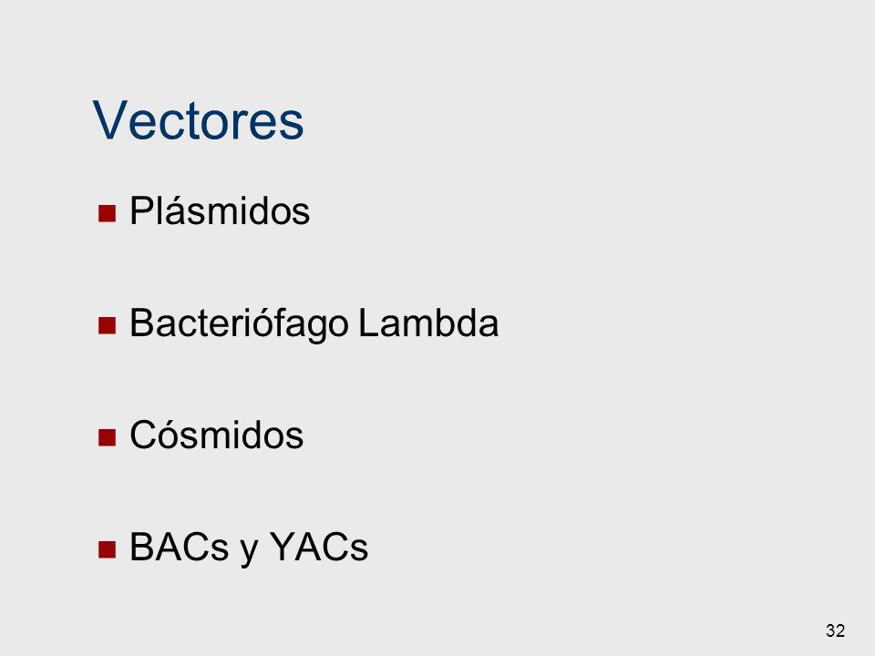 Vectores Plásmidos Bacteriófago Lambda Cósmidos BACs y YACs 32