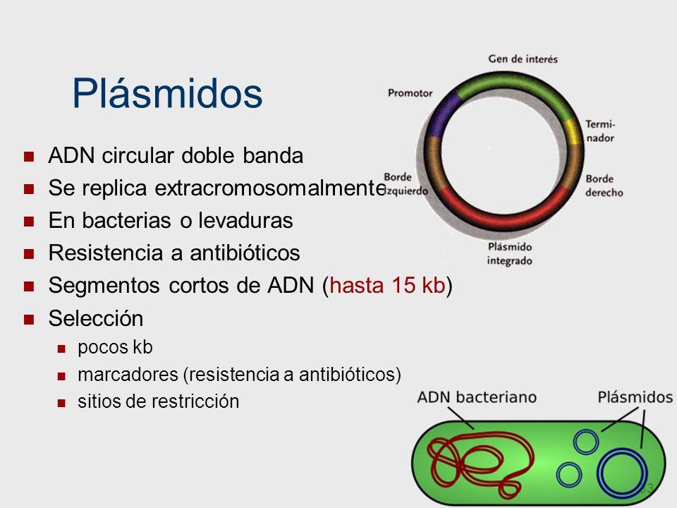 Plásmidos ADN circular doble banda Se replica extracromosomalmente