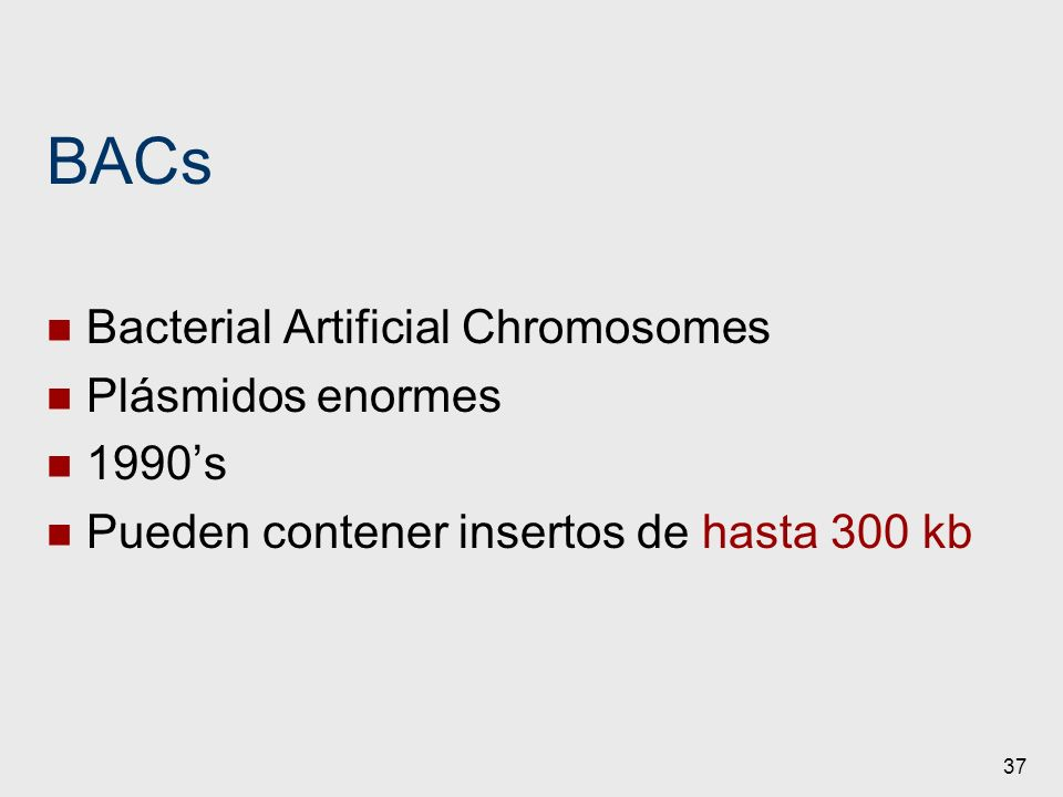 BACs Bacterial Artificial Chromosomes Plásmidos enormes 1990's