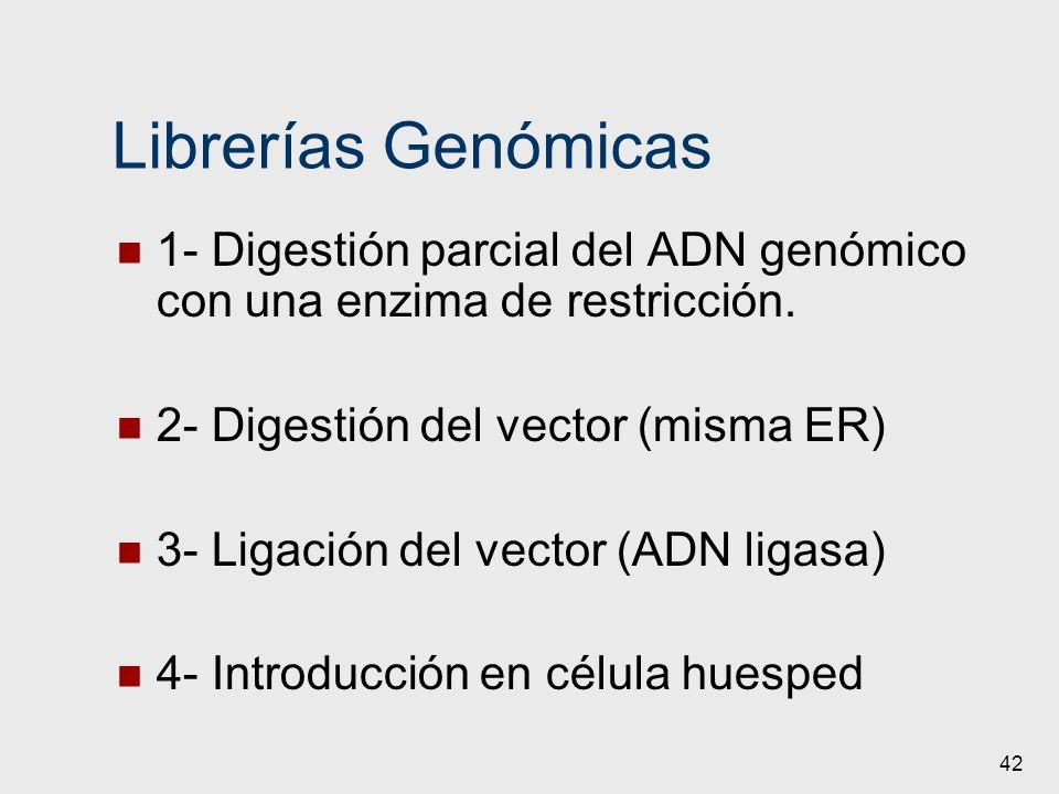 Librerías Genómicas 1- Digestión parcial del ADN genómico con una enzima de restricción. 2- Digestión del vector (misma ER)