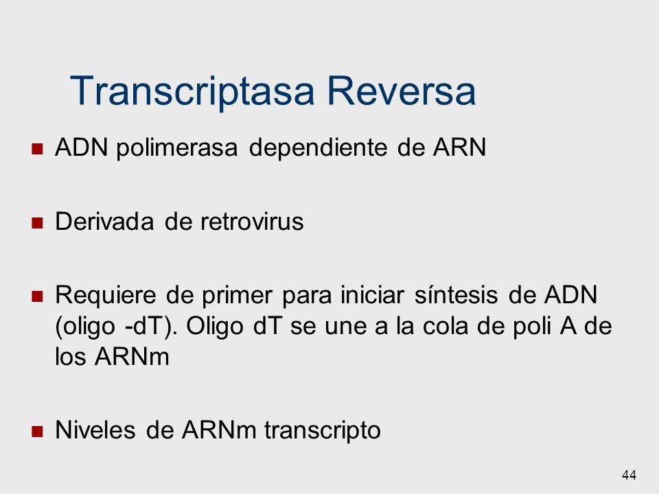 Transcriptasa Reversa