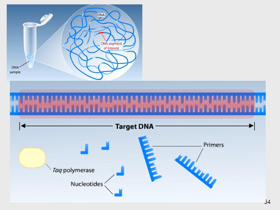 En el tubo está toda la cantidad del genoma