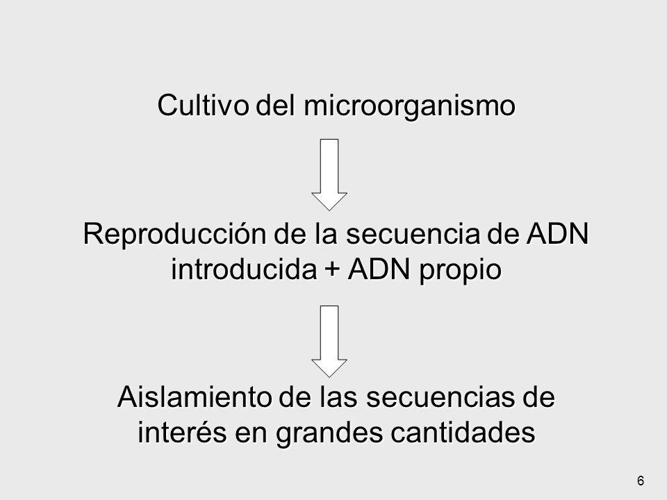 Cultivo del microorganismo