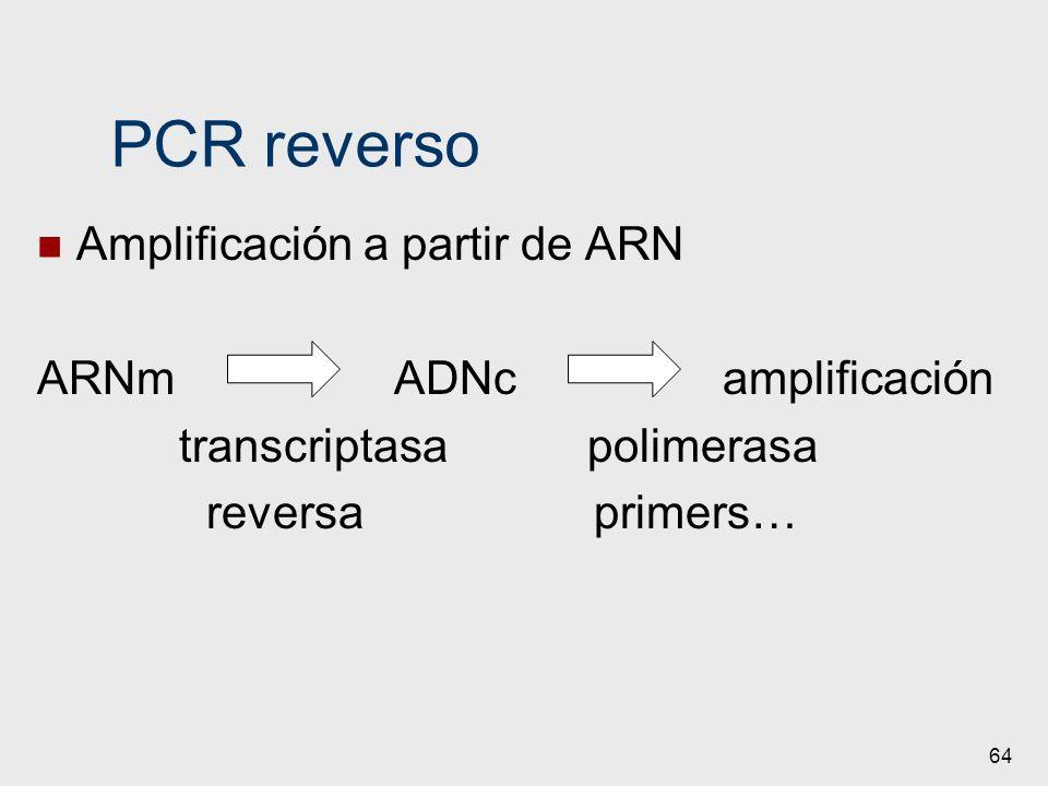 PCR reverso Amplificación a partir de ARN ARNm ADNc amplificación