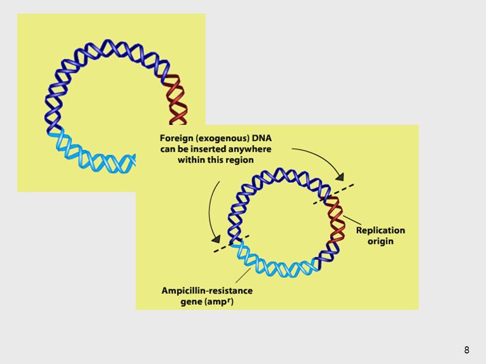 Los plásmidos tienen un inicio de replicación.