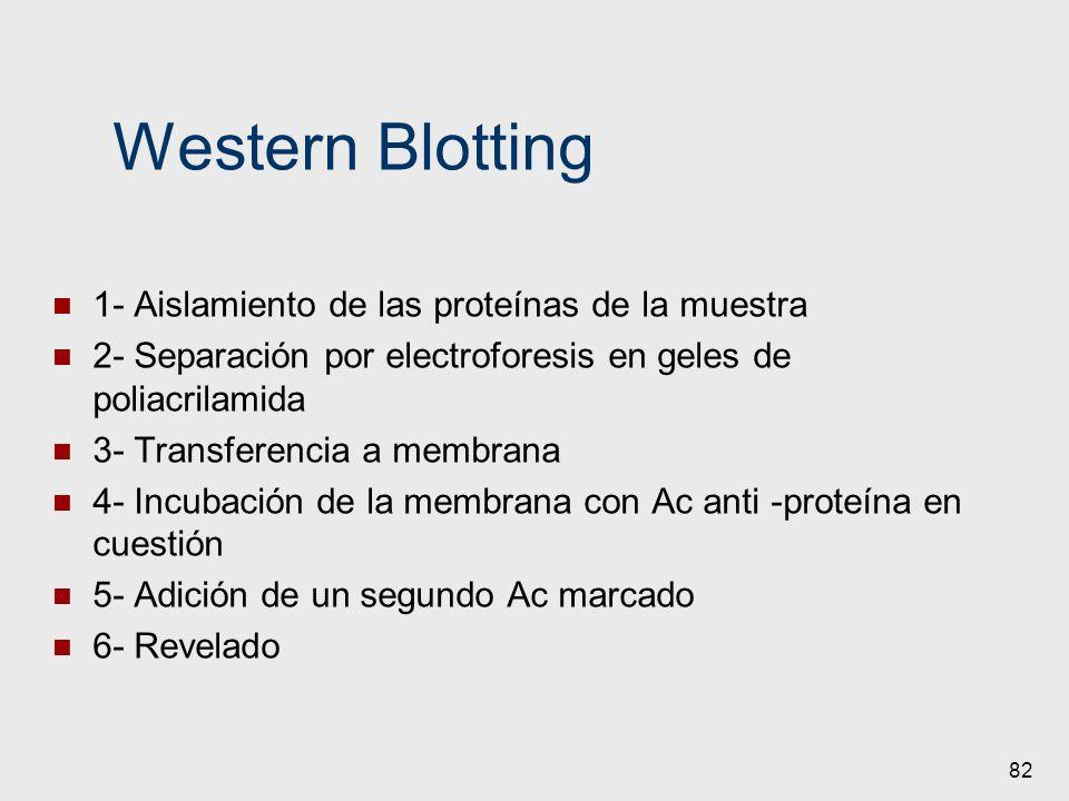 Western Blotting 1- Aislamiento de las proteínas de la muestra