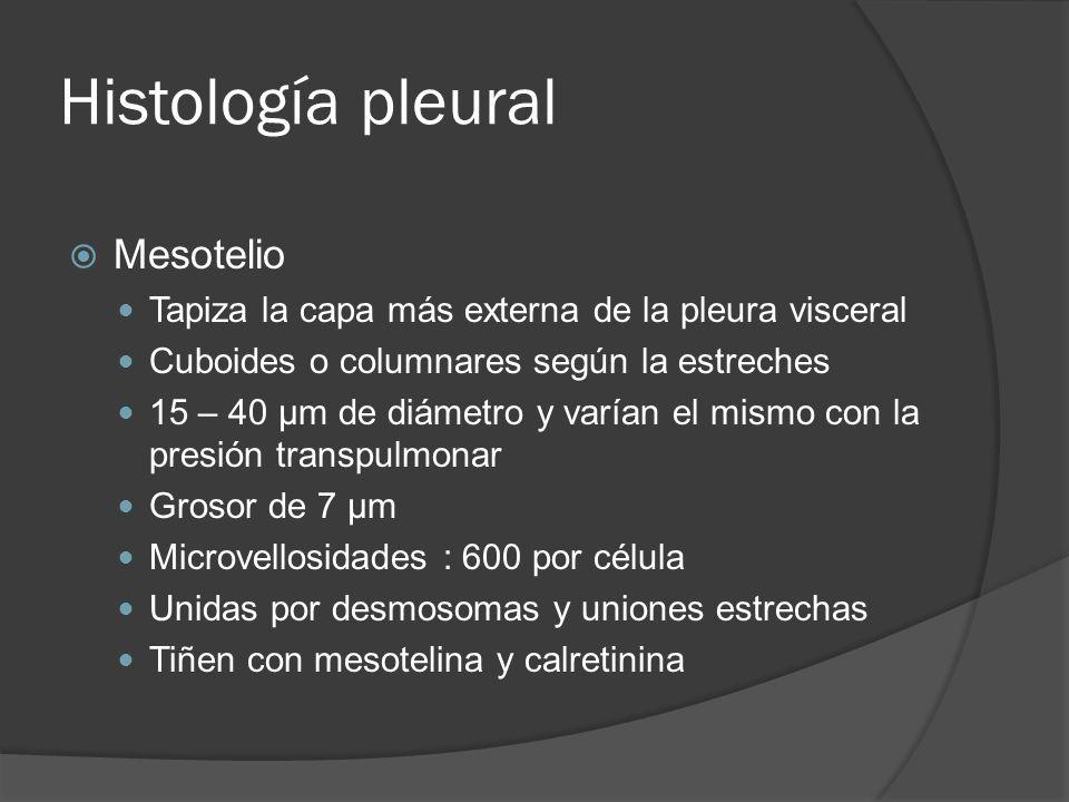 Histología pleural Mesotelio