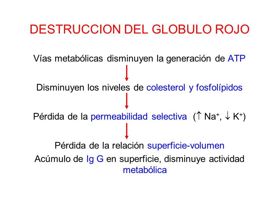 DESTRUCCION DEL GLOBULO ROJO