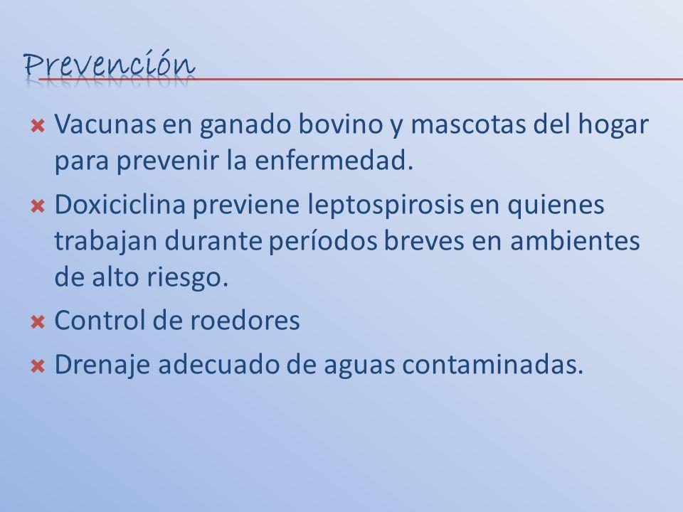 Prevención Vacunas en ganado bovino y mascotas del hogar para prevenir la enfermedad.