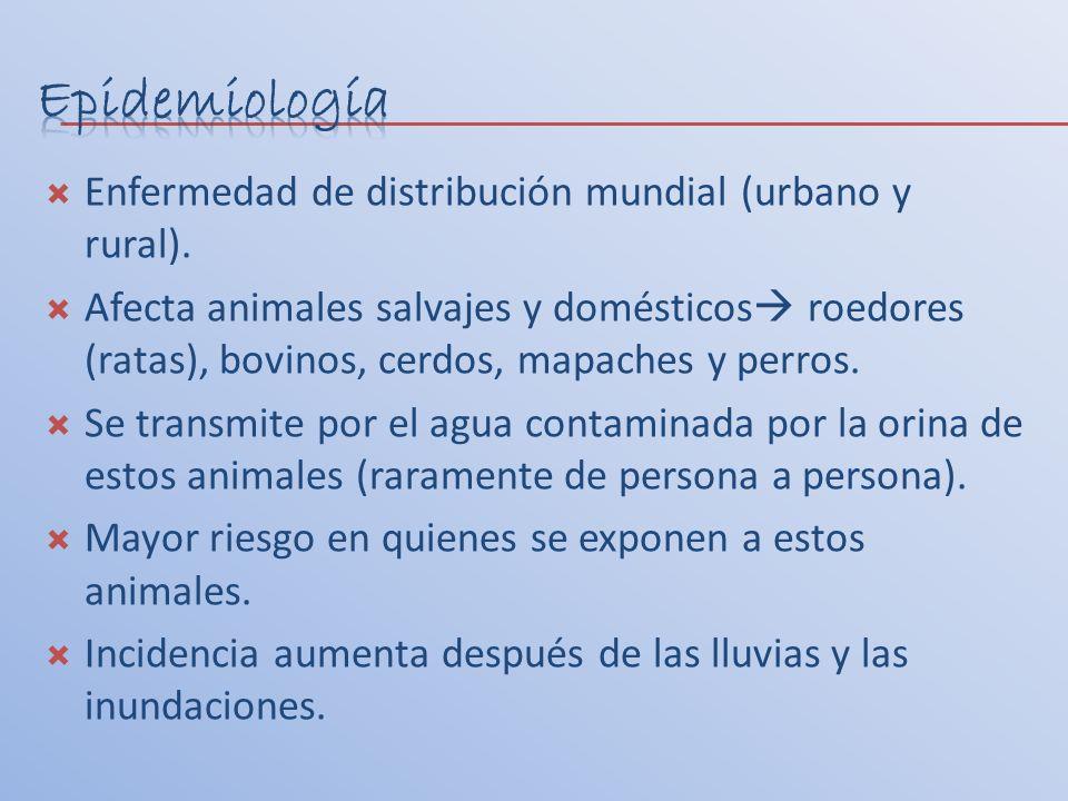 Epidemiología Enfermedad de distribución mundial (urbano y rural).