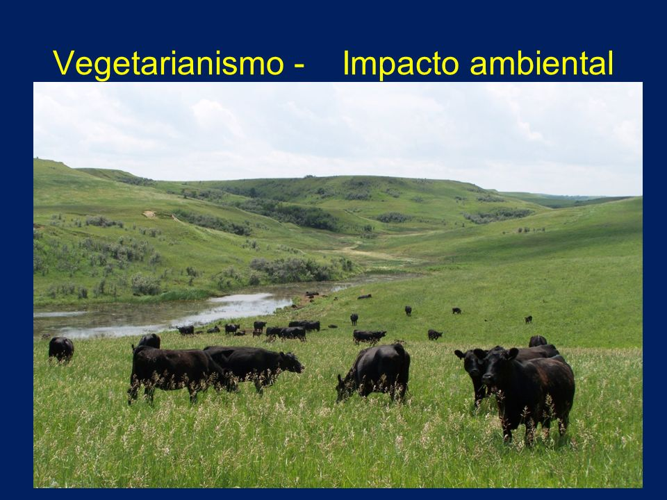 Vegetarianismo - Impacto ambiental