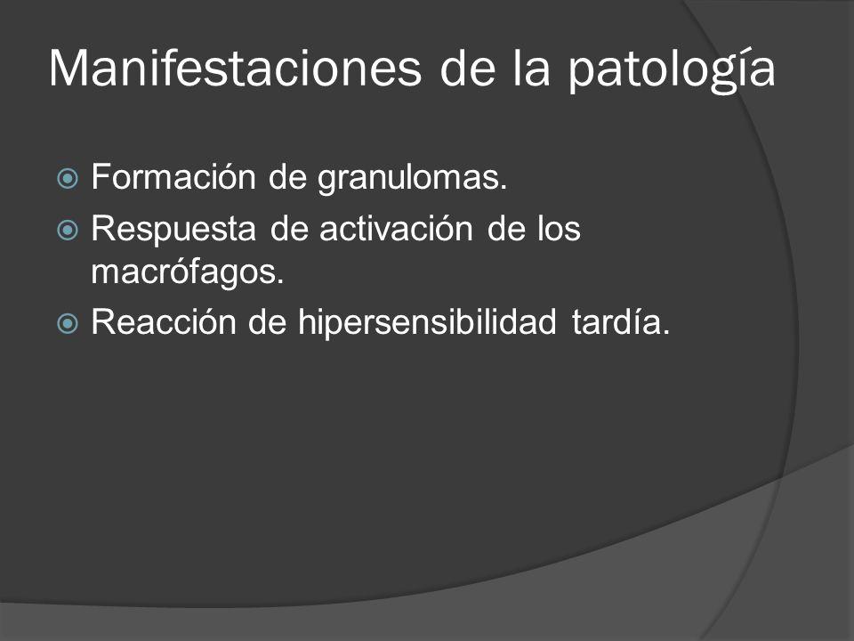 Manifestaciones de la patología