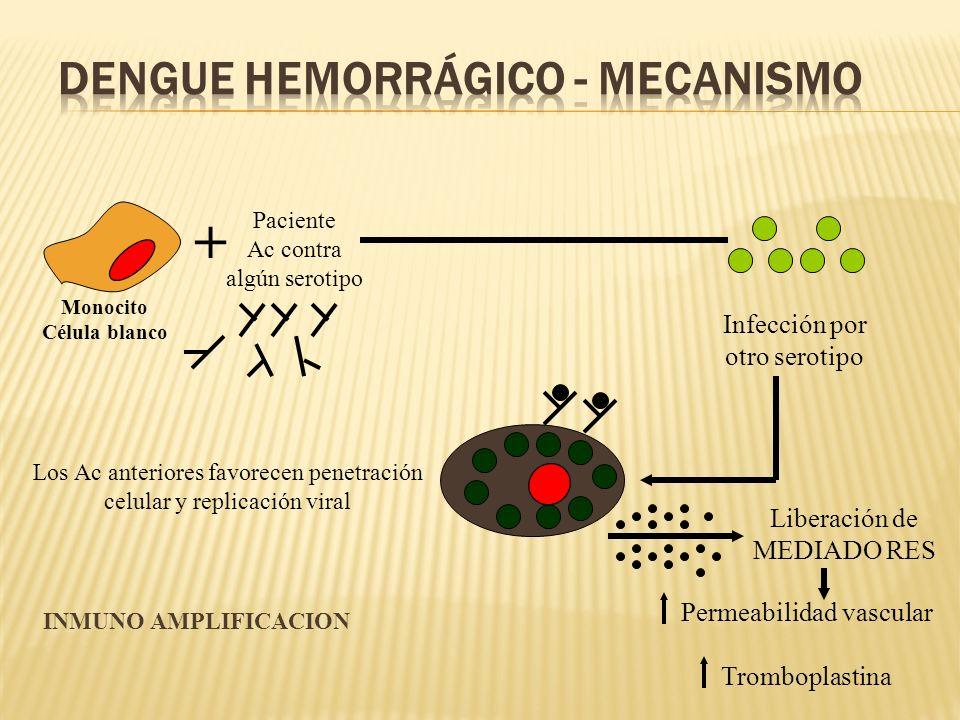 Dengue Hemorrágico - Mecanismo