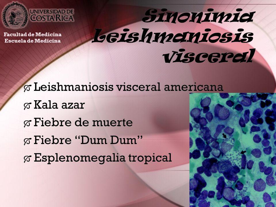 Sinonimia Leishmaniosis visceral