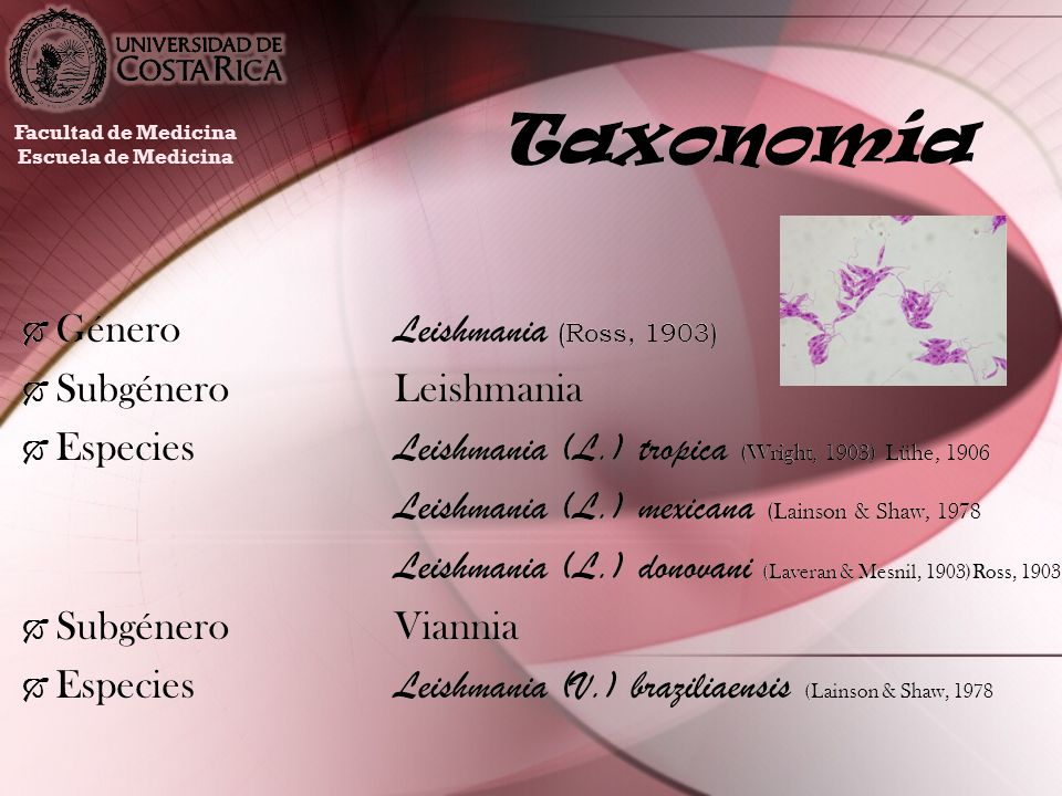 Taxonomía Género Leishmania (Ross, 1903) Subgénero Leishmania