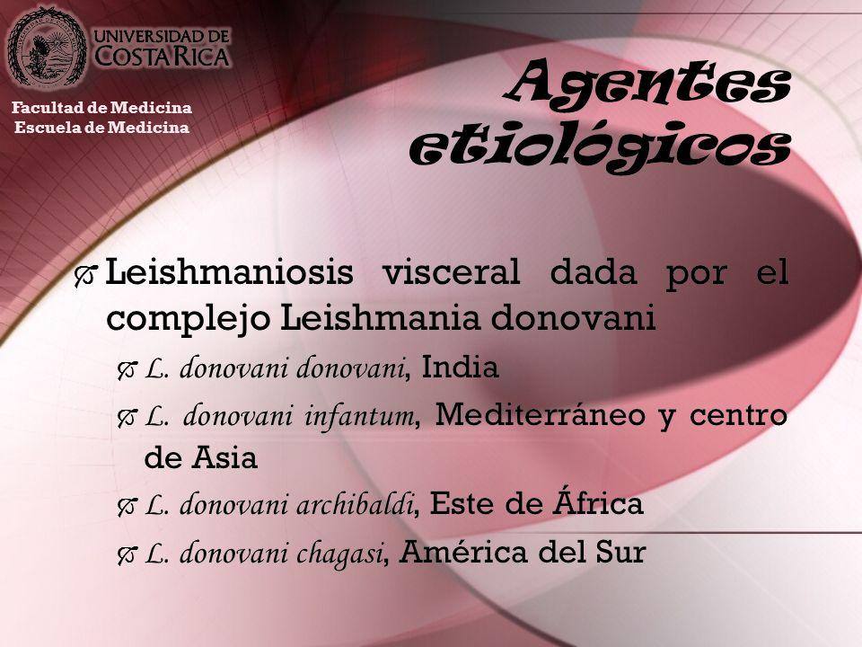 Agentes etiológicosFacultad de Medicina. Escuela de Medicina. Leishmaniosis visceral dada por el complejo Leishmania donovani.