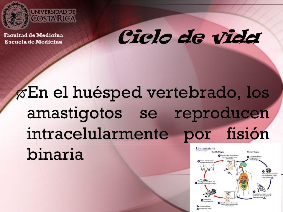 Ciclo de vidaFacultad de Medicina.Escuela de Medicina.