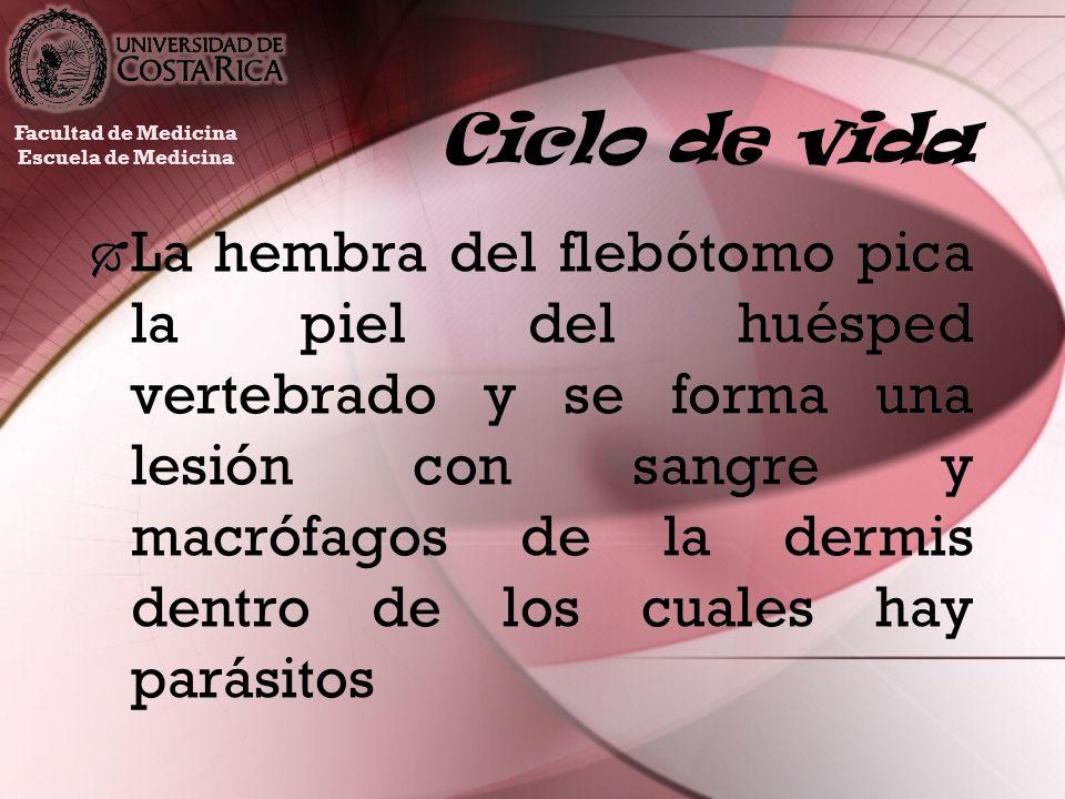 Ciclo de vida Facultad de Medicina. Escuela de Medicina.