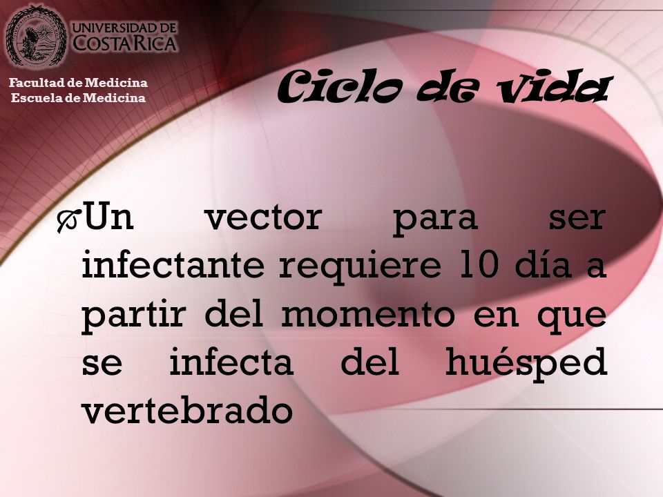 Ciclo de vidaFacultad de Medicina. Escuela de Medicina.
