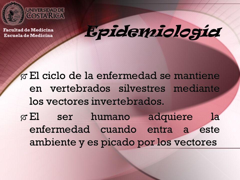 EpidemiologíaFacultad de Medicina. Escuela de Medicina.