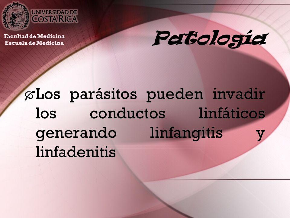 PatologíaFacultad de Medicina.Escuela de Medicina.