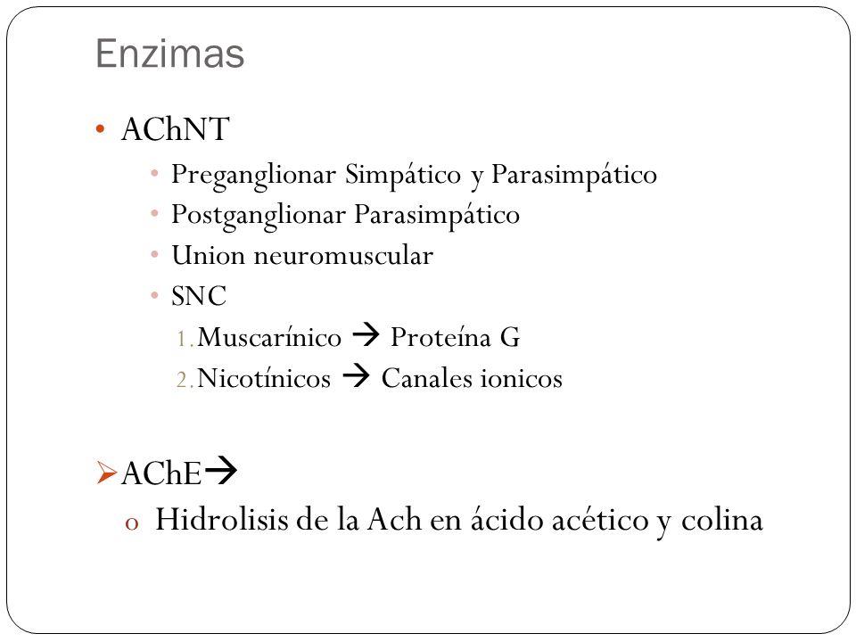 Enzimas AChNT AChE Hidrolisis de la Ach en ácido acético y colina