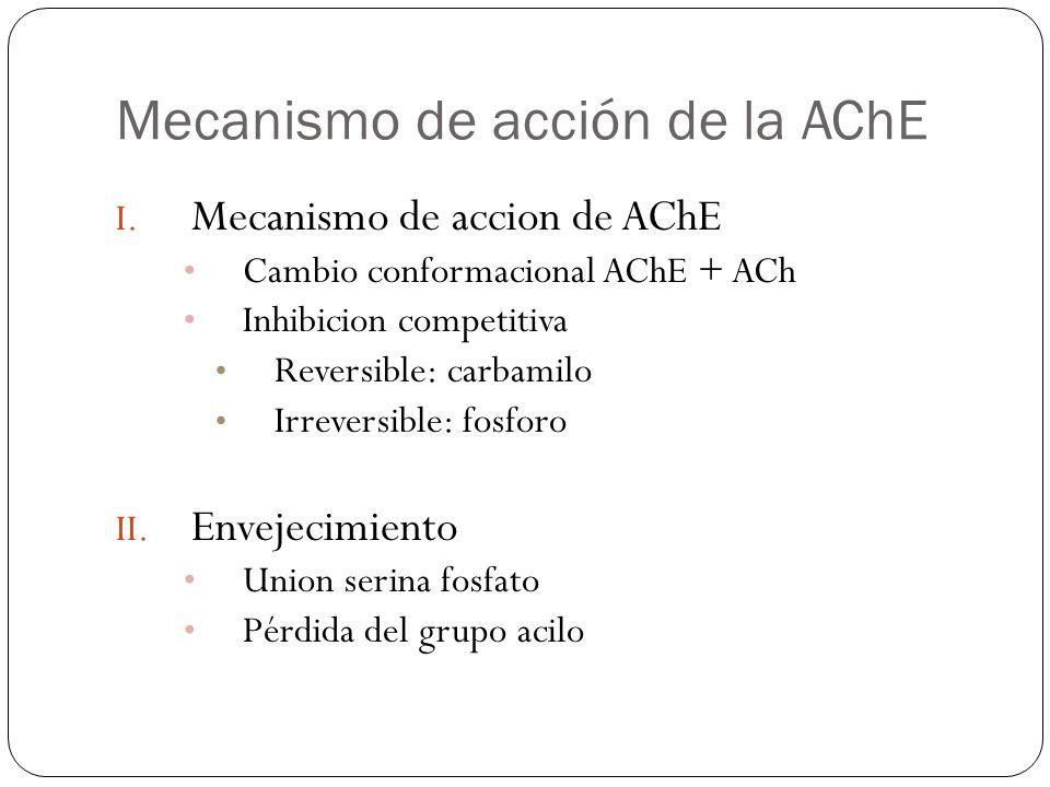 Mecanismo de acción de la AChE
