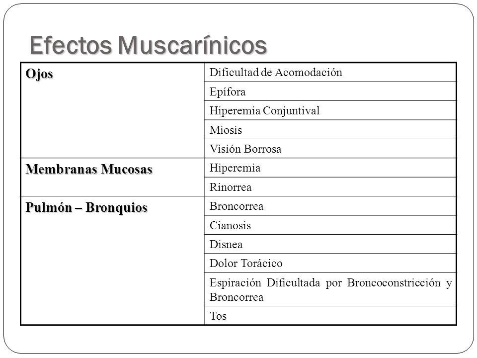 Efectos Muscarínicos Ojos Membranas Mucosas Pulmón – Bronquios