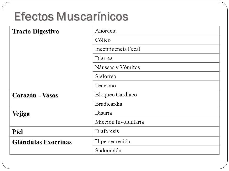 Efectos Muscarínicos Tracto Digestivo Corazón - Vasos Vejiga Piel