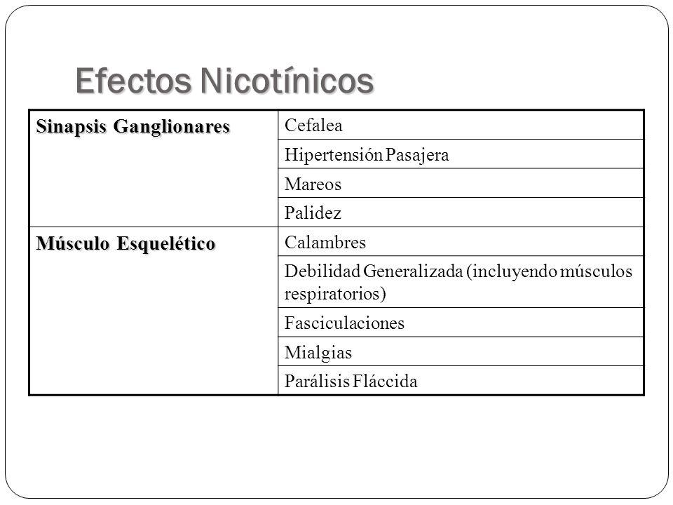 Efectos Nicotínicos Sinapsis Ganglionares Músculo Esquelético Cefalea