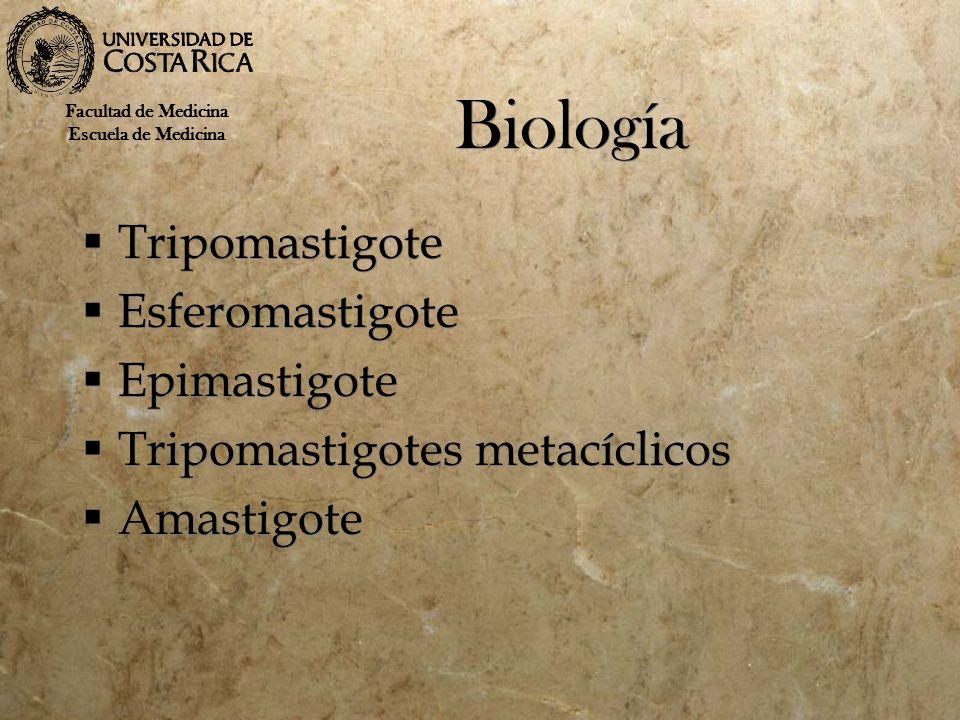 Biología Tripomastigote Esferomastigote Epimastigote