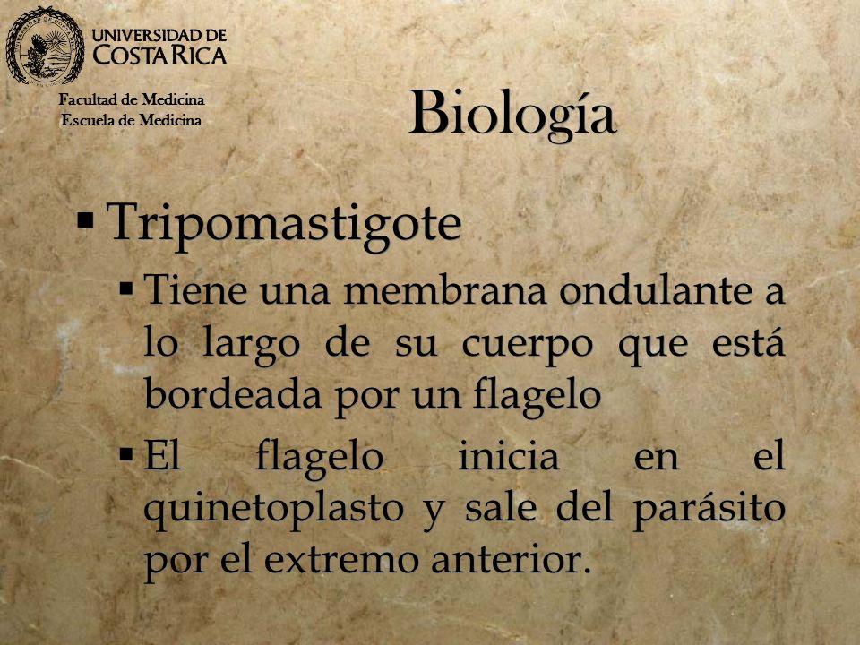 Biología Tripomastigote