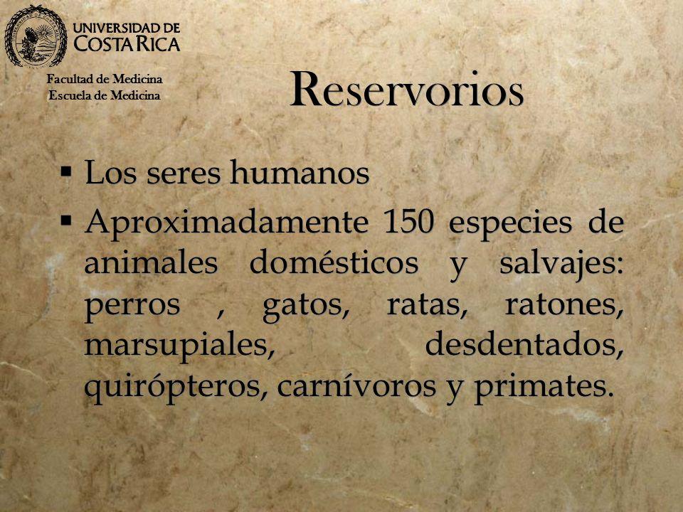 Reservorios Los seres humanos