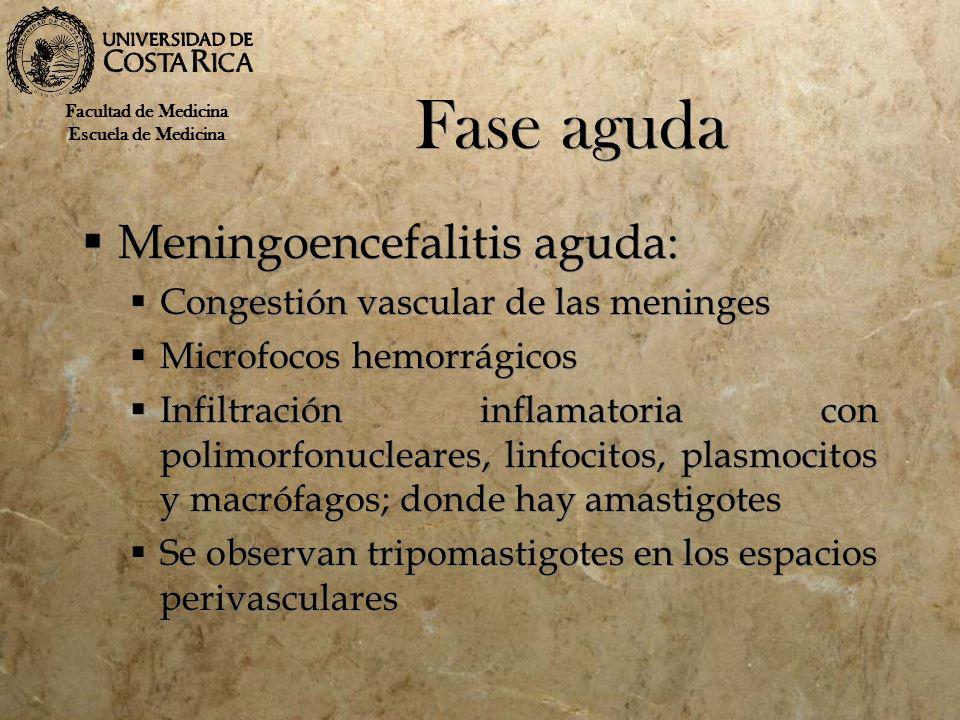 Fase aguda Meningoencefalitis aguda: