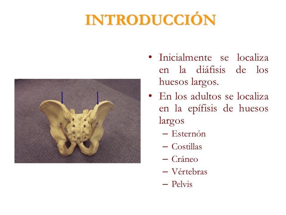 INTRODUCCIÓN Inicialmente se localiza en la diáfisis de los huesos largos. En los adultos se localiza en la epífisis de huesos largos.