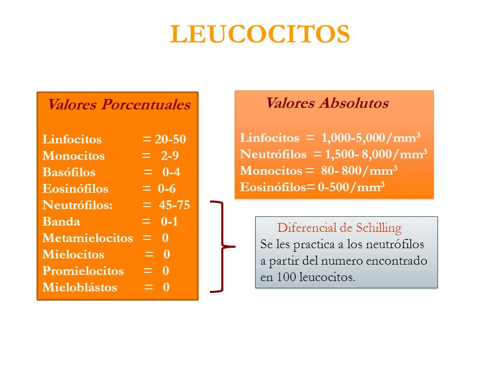LEUCOCITOS Valores Porcentuales Valores Absolutos
