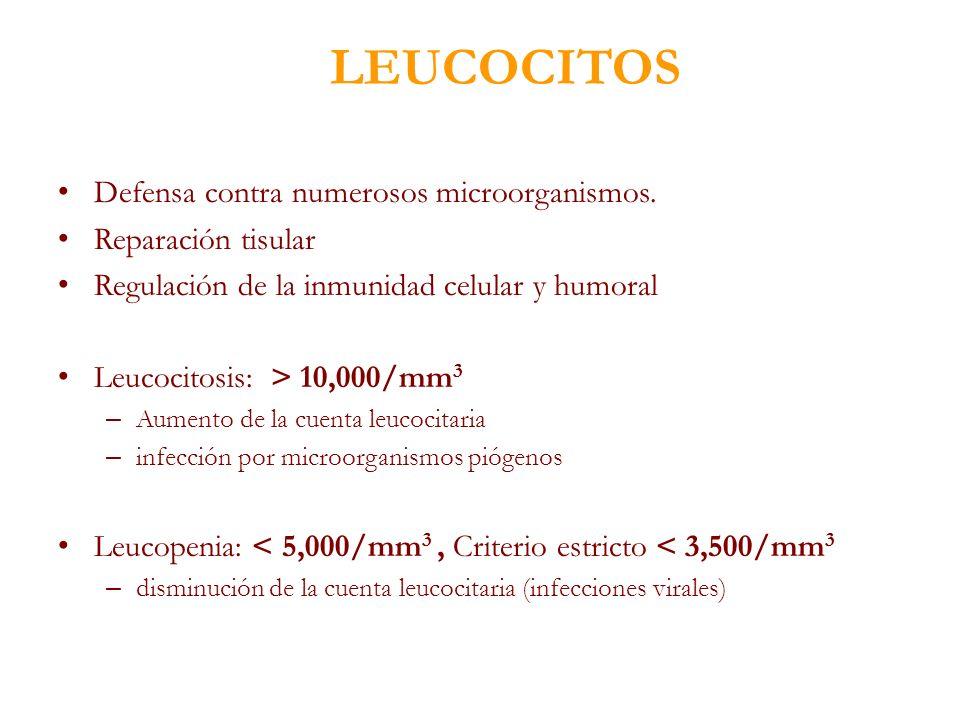 LEUCOCITOS Defensa contra numerosos microorganismos.