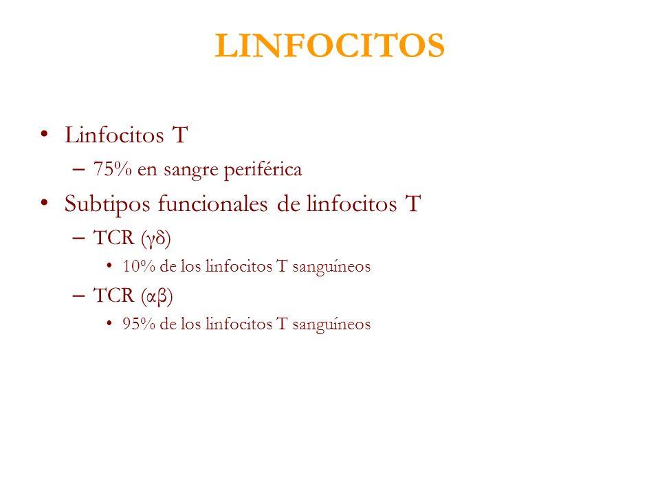 LINFOCITOS Linfocitos T Subtipos funcionales de linfocitos T