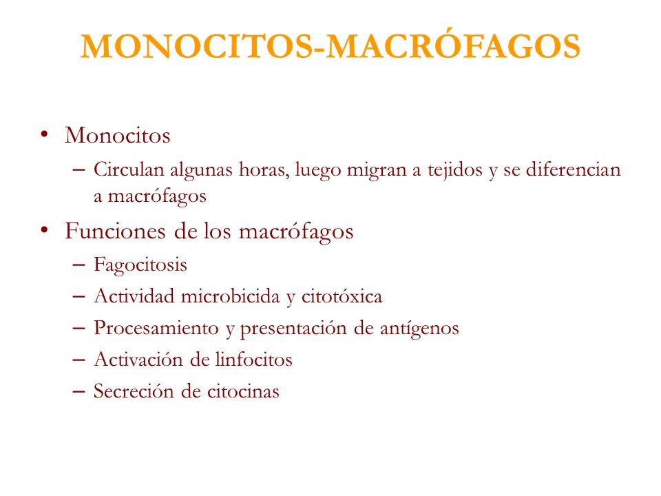 MONOCITOS-MACRÓFAGOS